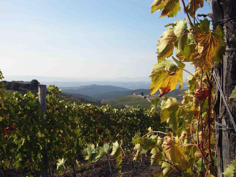 CdB - Capanna Vineyards 2