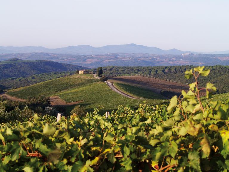 CdB - Capanna Vineyards