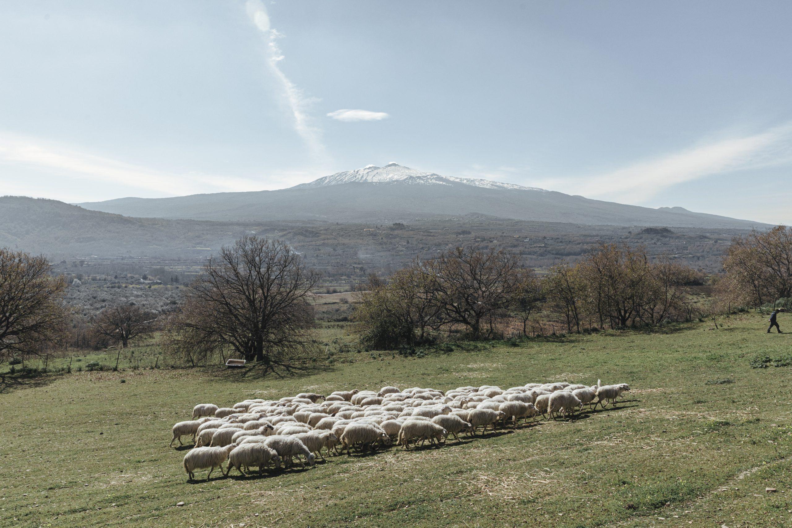 Essence of Sicily - The Shepherd's Eyes 04
